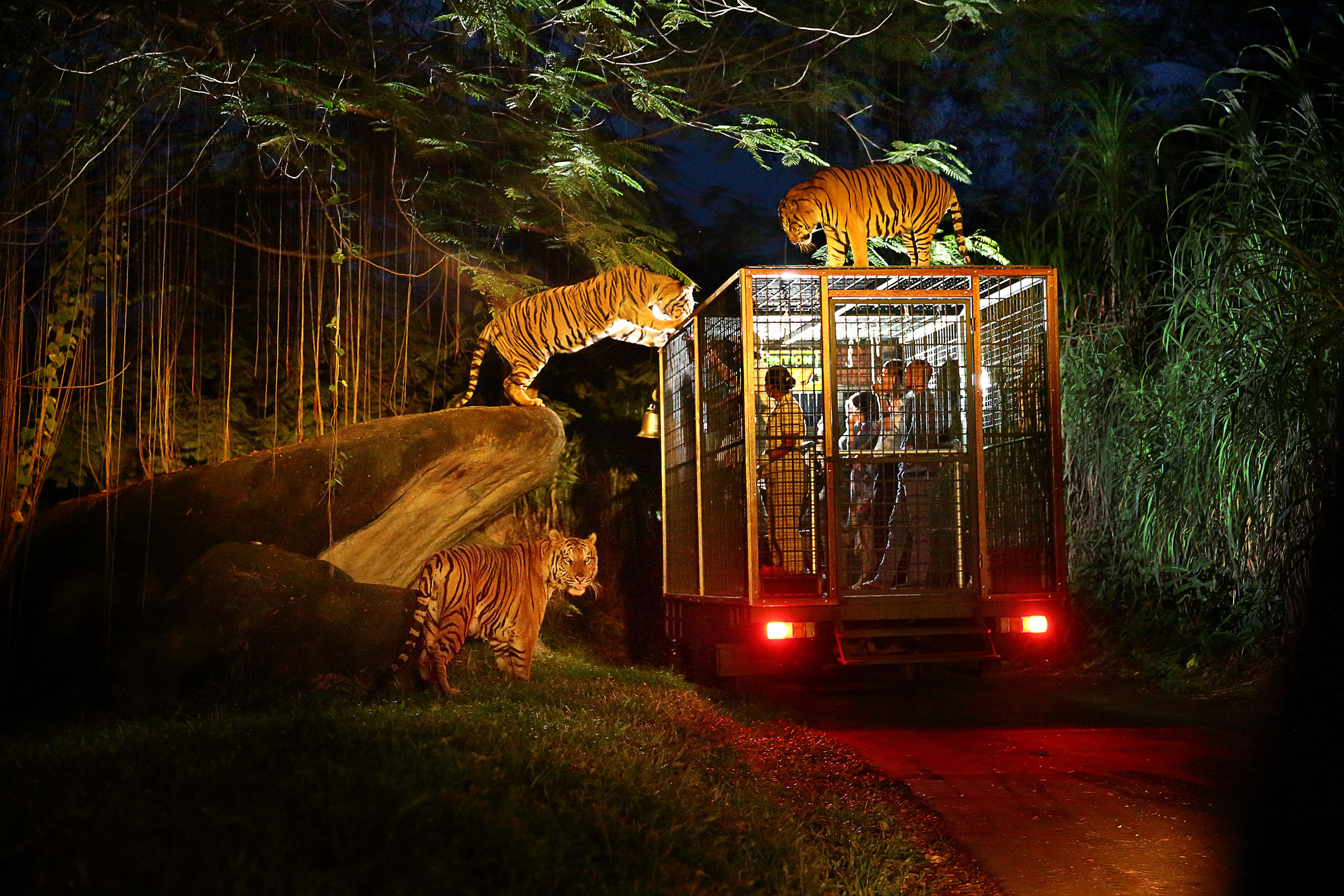 Vườn thú Night Safari